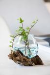 Glasskål på trädrot